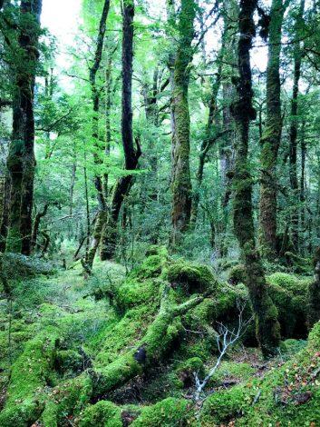 Lake Gunn Forest -metsämaisema.
