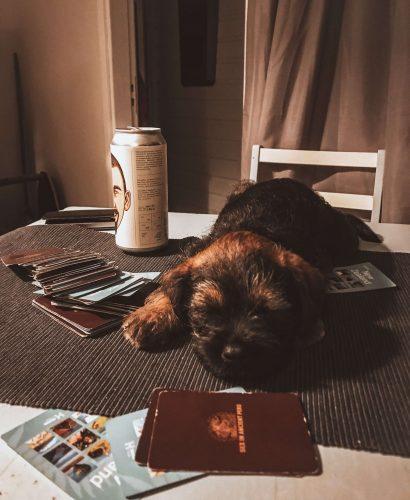borderterrierin pentu nukkuu pöydällä pelikorttien keskellä.