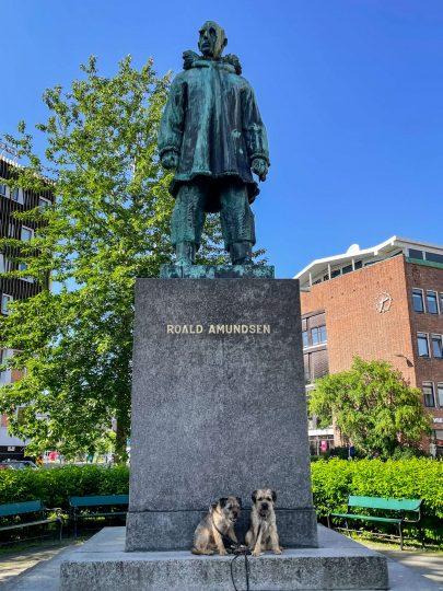 Kaksi borderterrieriä Roald Amundsenin patsaalla.