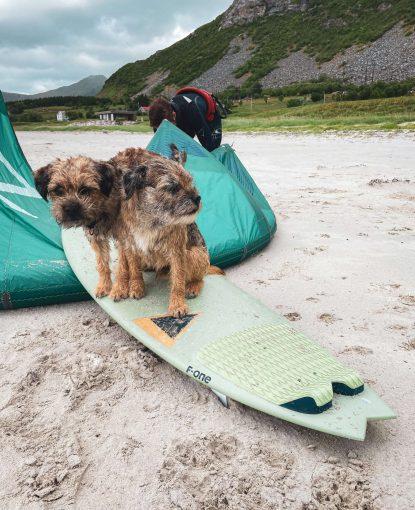 Borderterrierit Torres ja Vasco istuvat surffilaudan päällä Rambergin rannalla.