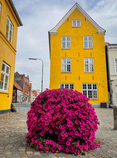 Keltainen talo ja kukkia Tonderissa.