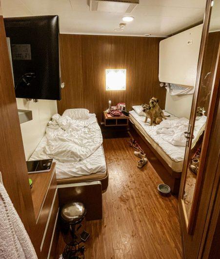 Borderterrierit Torres ja Vasco laivan hytissä sängyllä.